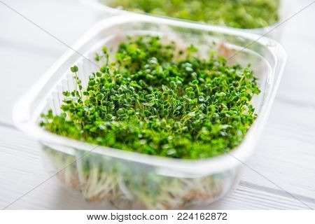 Fresh organic sprout micro greens in plastic box on the white wooden table. Healthy Raw diet food concept. Copy space for text. Selective focus