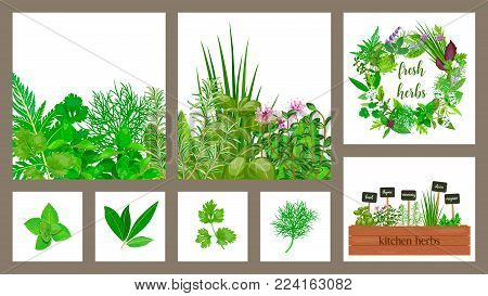 Wooden crate of farm fresh cooking herbs in wooden box. Set of cards. Greenery, basil, vector icon, rosemary, herbal set, thyme, text. Horticulture. houseplants. Kitchen Garden Gardening Hydroponik