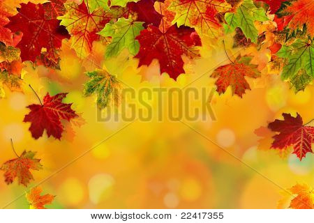 Autumn card of colored leafs with copy space for your text