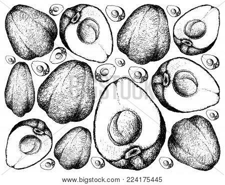 Fruit, Illustration Background of Hand Drawn Sketch of Fresh Pomerac, Malay Rose Apple, Pomme Malac or Syzygium Malaccense Fruits.