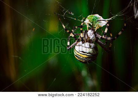spider close range on a blurred background.
