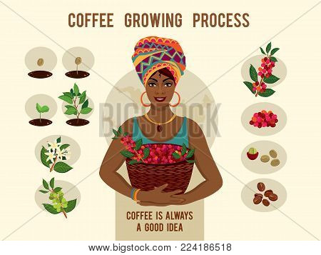 Poster with process of planting and growing a coffee tree . Beautiful woman is a coffee farmer with a basket of coffee berries