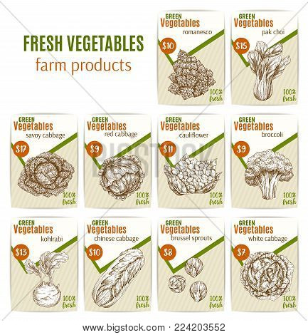 Vegetables sketch price cards for farm shop or veggies market store. Vector farm harvest romanesco salad and brussels sprout or savoy and cauliflower cabbage, broccoli and kohlrabi or vegetarian pak choi lettuce