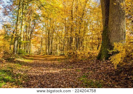 Walk In The Fontainebleau Forest In Autumn In France