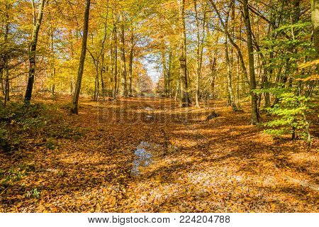 After The Rain In Fontainebleau Forest In Autumn