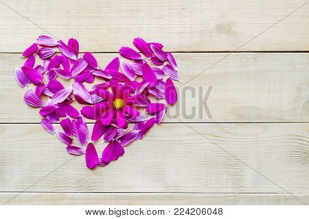 top view of flower heart shape made of petals and single opening flower head of cosmos plant flat lay on wooden background