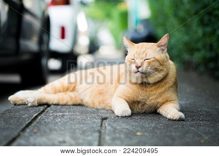 A brown cute cat lying down and rest on the floor, selective focus.