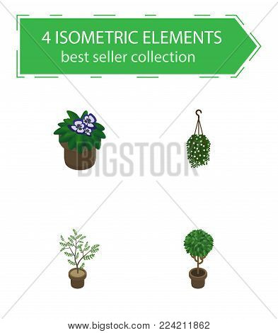 Isometric houseplant set of flowerpot, blossom, tree and other vector objects. Also includes flower, flowerpot, hanging elements.