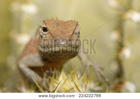 Image of a chameleon on nature background. Reptile. Animal.