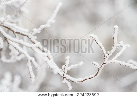 Winter tree branches