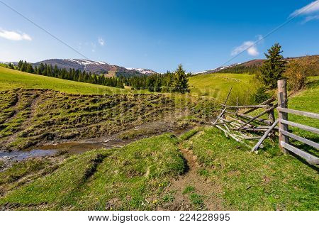 brook among the grassy slopes in rural area. beautiful springtime landscape of Ukrainian alps. mountain ridge with snowy tops in the distance