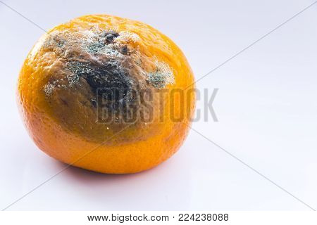 Citrus fruit is spoiled. Rotten mandarin with a mold on a white background. Copy space. Close-up.