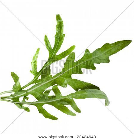 Fresh rucola lettuce  (Arugula), isolated on white
