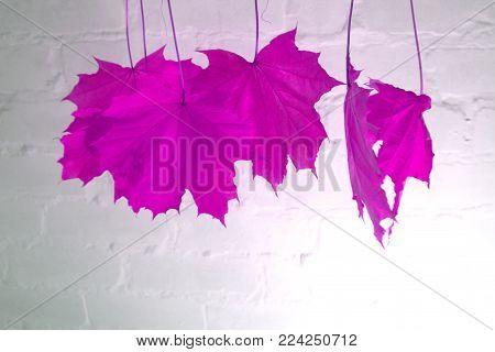 Skeleton leaf abstract background texture leaf blue,