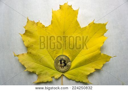 Golden bitcoin coin on the Gold Sheet Metal background. Sheet Metal, Metal Sheets, Sheeting.