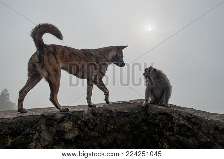 Monkey shouting on dog because she is frightened. Enemies in wild life poster