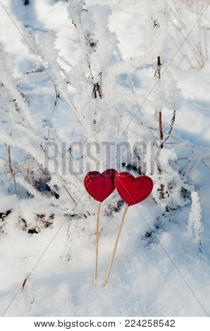 Two bright red hearts on sticks staying on white snow and branches background. Valentine day