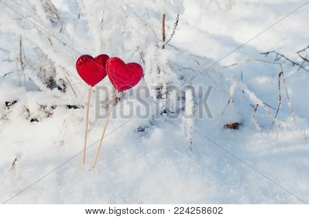 Copy space. Nice red hearts staying on sticks in winter snow.