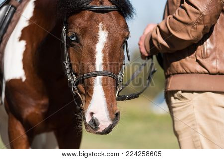 Beautiful Portrait Of A Brown Horse