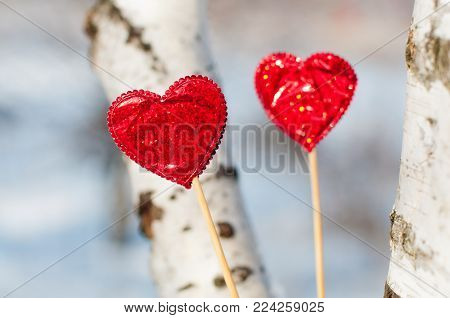 Love decorations. Two bright red hearts staying on birch tree background in sunny winter day.