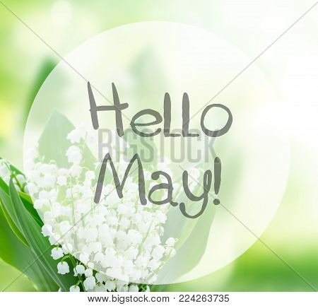 Lilly Of The Valley Flowers Close Up On Green Bokeh Background With Hello May Words
