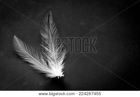 Feather Bird Fly On A Black Background