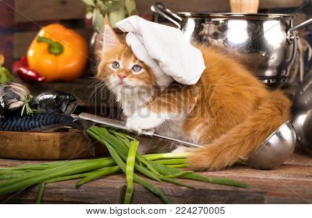 Kitten in the kitchen in the hat of the cook