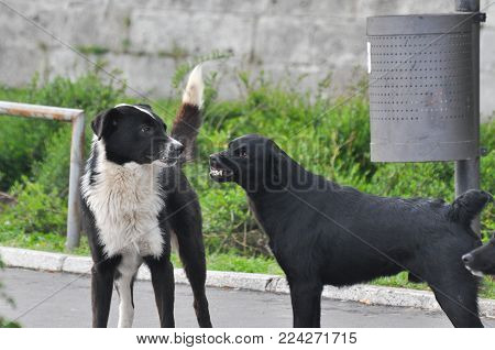 Danger in the city. Two aggressive dogs fighting on street