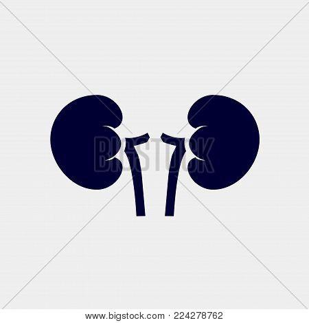 kidney icon, Vector illustration. organ icon vector