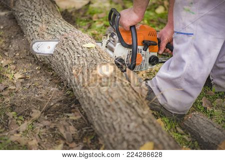 Closeup professional chainsaw machine blade cutting a log of wood, man holding a chainsaw in hands and a log of wood with his foot