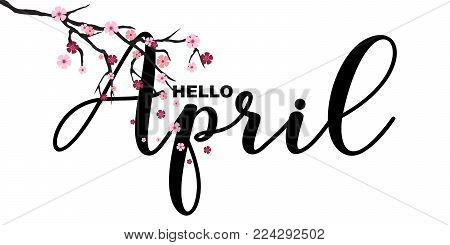 Hello April, spring related motivational quote, isolated on white background, vector illustration. Hello April, handwritten letters, Japanese sakura branch, little cute flowers falling. Hello April lettering quotation.
