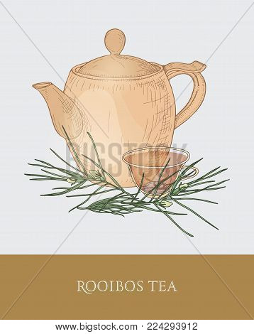 Colorful drawing of teapot, transparent cup with steeping rooibos tea, fresh leaves on gray background. Tasty aromatic herbal infusion. Vector illustration hand drawn in vintage style for tag, label