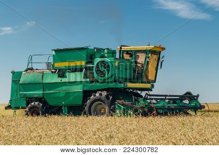 Combine harvester machine harvesting wheat in the field at sunny day.