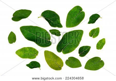 Leaves Many leaves White background Isolate Message board Leaf frame Green
