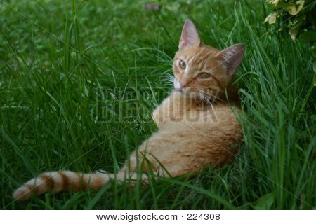 poster of tabby cat napping in the grass.