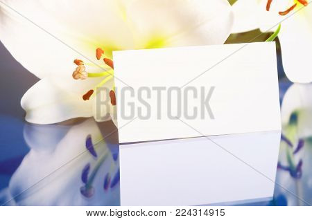 Flower spring background. Lily flower, Lilium Navona, with blank card, spring flower composition. Colorful spring flower background with spring lily flower on the glass surface. Spring flower still life