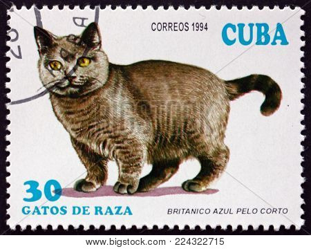 CUBA - CIRCA 1994: a stamp printed in Cuba shows Blue British shorthair, domesticated breed of cat, circa 1994