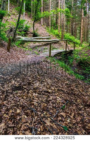 wooden bridge above the brook in pine forest. lovely nature scenery in summertime