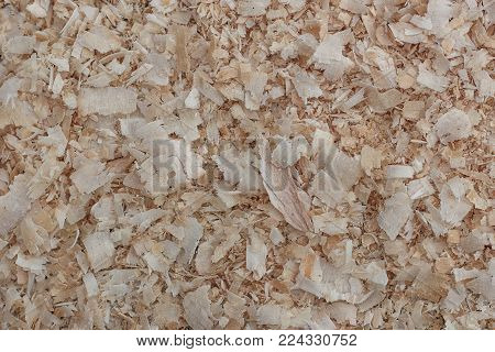 Texture of wooden shavings (sawdust) as a natural background. Close-up.