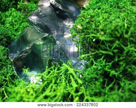 Green moss plant nature blue fragment glass stone macro photo