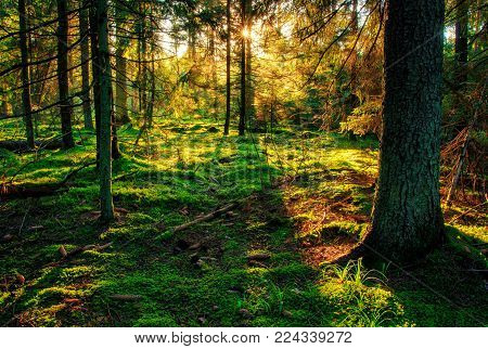 Spring forest in the sunny bright morning. Sunlight shining through trees. Natural scene. Green forest background. Majestic woodland