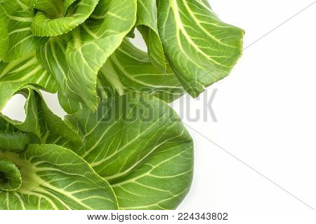 Bok choy (Pak choi) top view isolated on white background two fresh cabbages leaves
