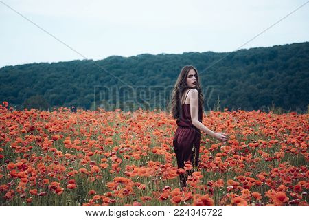 Beauty, Summer, Spring, Poppy Seed. Drug And Love Intoxication, Opium, Medicinal. Poppy, Remembrance