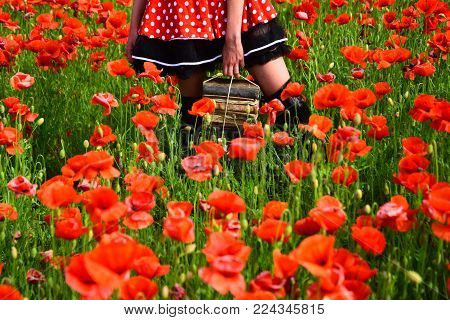 Education, Business, Grammar, Woman With Books. Opium Poppy, Agile Business, Ecology. Journalism And
