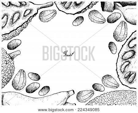 Fruit, Illustration Hand Drawn Sketch Frame of Ripe and Sweet Jackfruit Isolated on White Background.