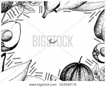 Fruit, Illustration Frame of Hand Drawn Sketch of Fresh Pomerac, Sugar Baby Watermelon, Silver Bluggoe Banana Isolated on White Background.