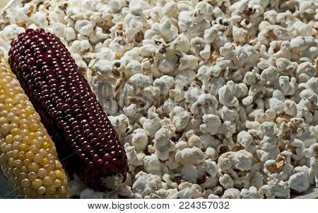 corncob, food, popcorn, sweet, to sprinkle white, yellow, appetite