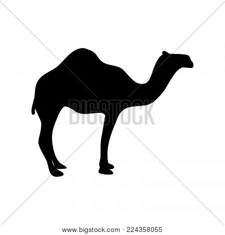 Camel icon isolated on white background. Camel icon modern symbol for graphic and web design. Camel icon simple sign for logo, web, app, UI. Camel icon flat vector illustration, EPS10.