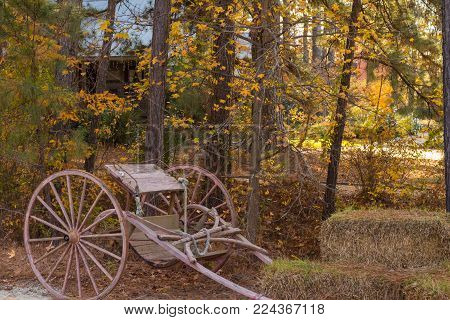 Antique horse cart in fall colors at the Cape Fear Botanical Gardens