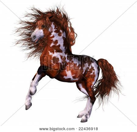 a wounderful horse